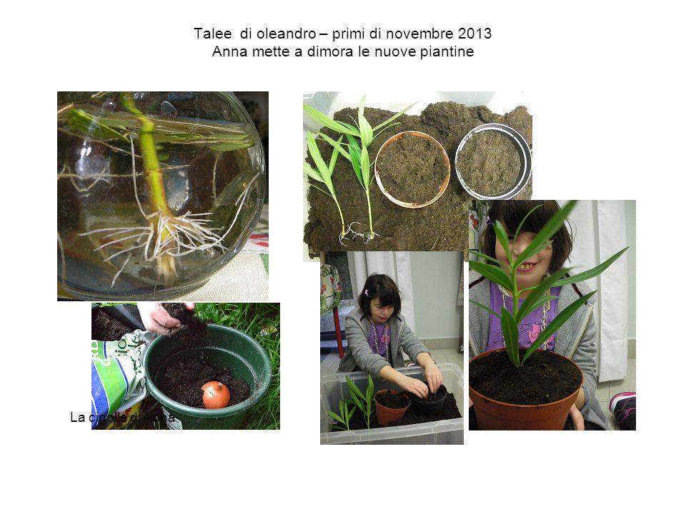 Talee di oleandro – primi di novembre 2013 Anna mette a dimora le nuove piantine La cipolla di Anna