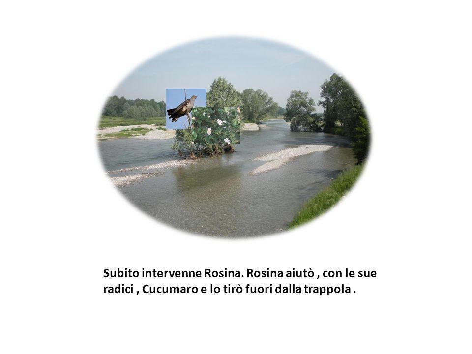 Subito intervenne Rosina. Rosina aiutò, con le sue radici, Cucumaro e lo tirò fuori dalla trappola.