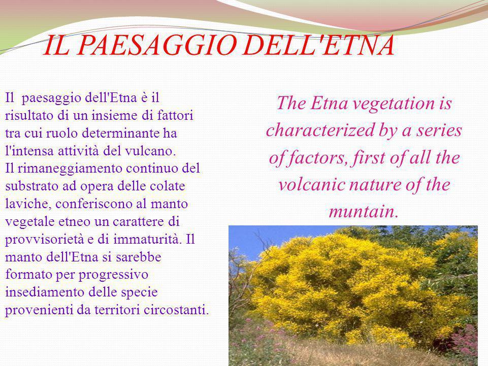 IL PAESAGGIO DELL'ETNA Il paesaggio dell'Etna è il risultato di un insieme di fattori tra cui ruolo determinante ha l'intensa attività del vulcano. Il