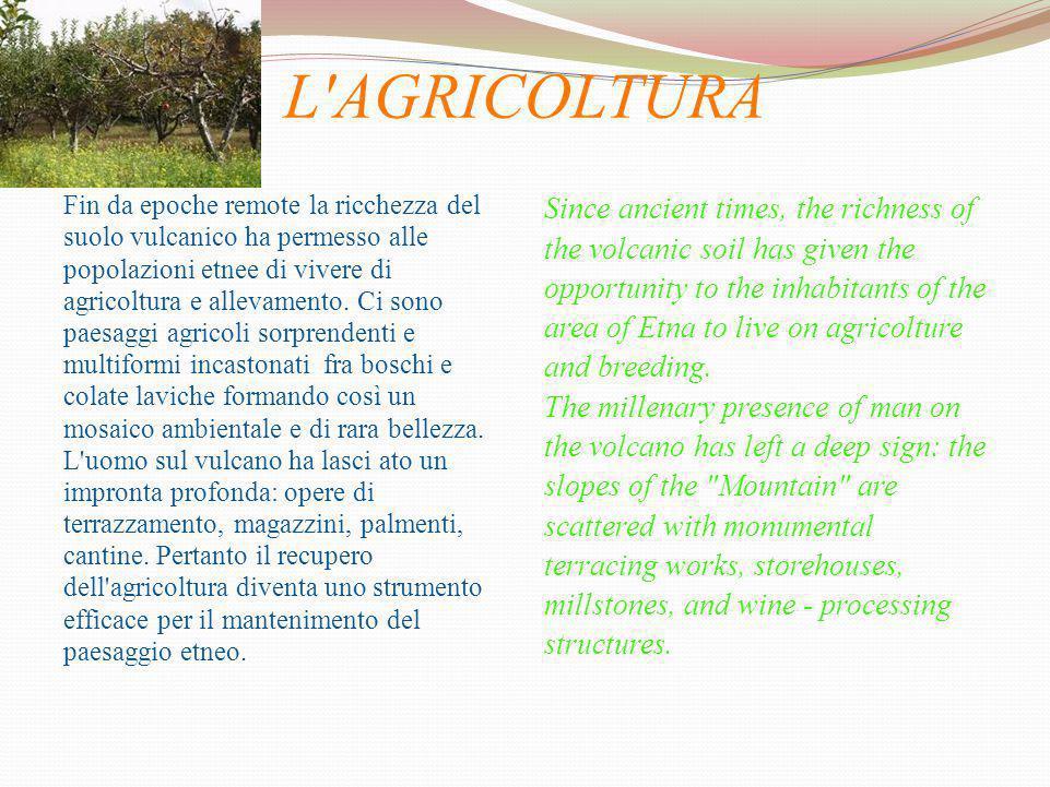 L'AGRICOLTURA Fin da epoche remote la ricchezza del suolo vulcanico ha permesso alle popolazioni etnee di vivere di agricoltura e allevamento. Ci sono