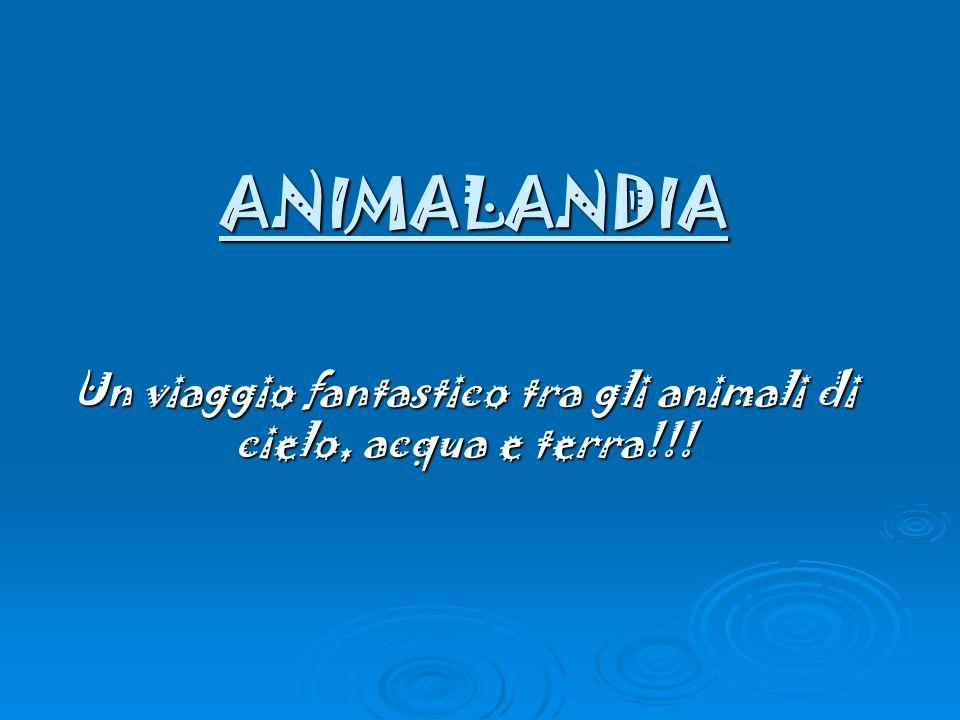 ANIMALANDIA Un viaggio fantastico tra gli animali di cielo, acqua e terra!!!