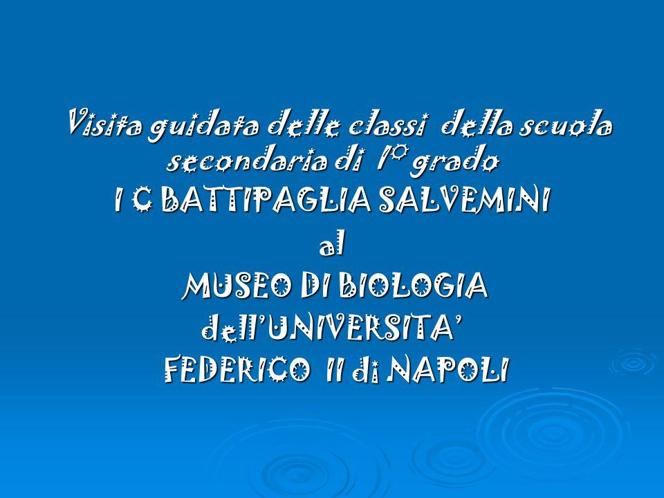 Visita guidata delle classi della scuola secondaria di I° grado Visita guidata delle classi della scuola secondaria di I° grado I C BATTIPAGLIA SALVEMINI al MUSEO DI BIOLOGIA MUSEO DI BIOLOGIAdell'UNIVERSITA' FEDERICO II di NAPOLI FEDERICO II di NAPOLI