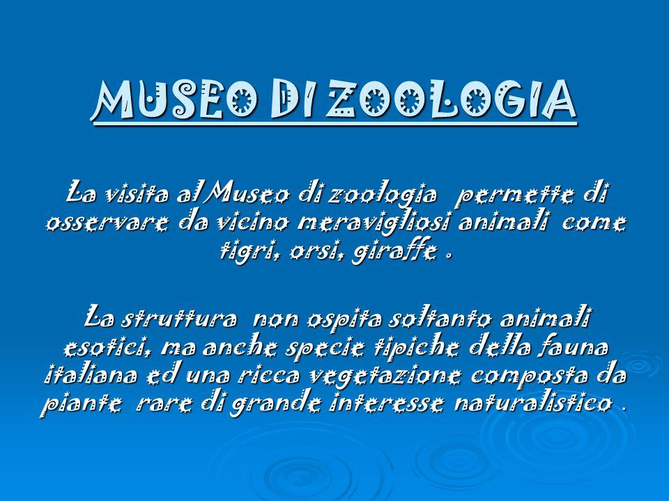 MUSEO DI ZOOLOGIA La visita al Museo di zoologia permette di osservare da vicino meravigliosi animali come tigri, orsi, giraffe.