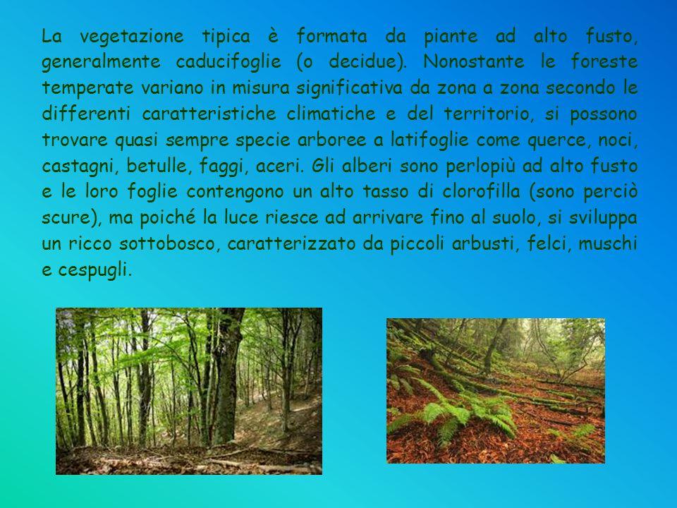 La vegetazione tipica è formata da piante ad alto fusto, generalmente caducifoglie (o decidue). Nonostante le foreste temperate variano in misura sign