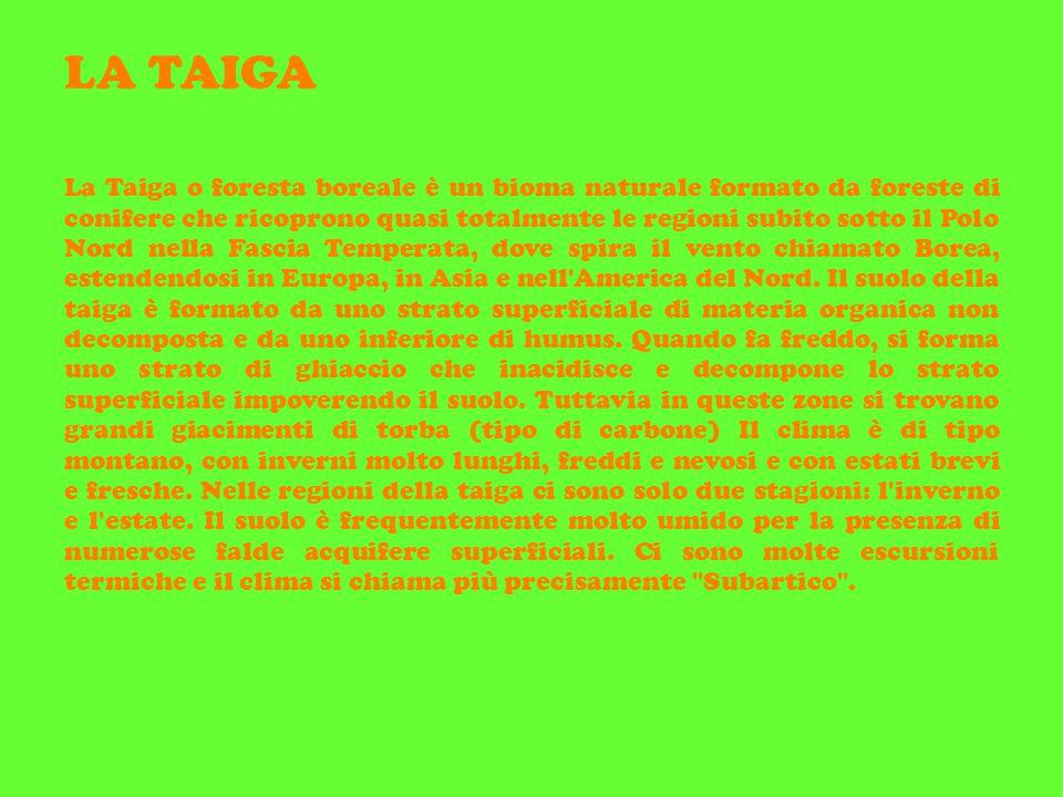 LA TAIGA La Taiga o foresta boreale è un bioma naturale formato da foreste di conifere che ricoprono quasi totalmente le regioni subito sotto il Polo Nord nella Fascia Temperata, dove spira il vento chiamato Borea, estendendosi in Europa, in Asia e nell America del Nord.