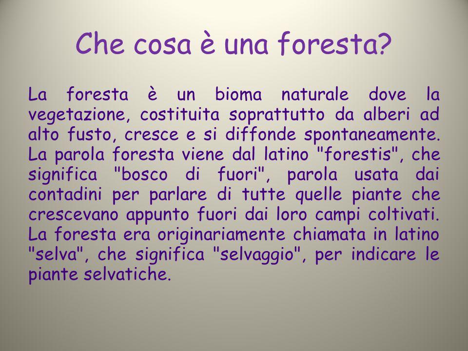 Che cosa è una foresta? La foresta è un bioma naturale dove la vegetazione, costituita soprattutto da alberi ad alto fusto, cresce e si diffonde spont