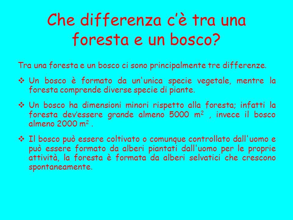 Che differenza c'è tra una foresta e un bosco? Tra una foresta e un bosco ci sono principalmente tre differenze.  Un bosco è formato da un'unica spec