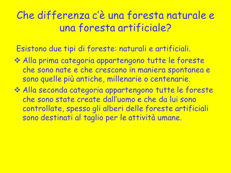 Che differenza c'è una foresta naturale e una foresta artificiale? Esistono due tipi di foreste: naturali e artificiali.  Alla prima categoria appart