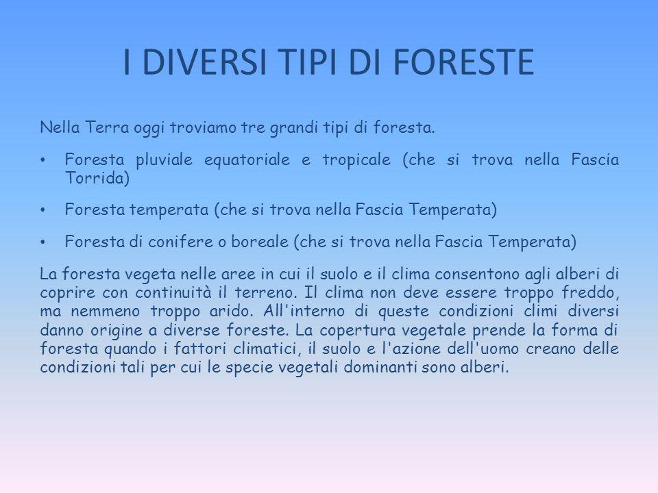 I DIVERSI TIPI DI FORESTE Nella Terra oggi troviamo tre grandi tipi di foresta. Foresta pluviale equatoriale e tropicale (che si trova nella Fascia To