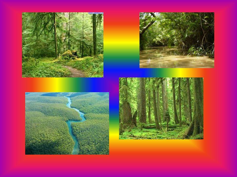 LE FORESTE TEMPERATE La foresta temperata è un particolare bioma che si osserva nelle regioni della Terra caratterizzate da clima temperato, mediamente umido, ma che talvolta presenta grosse variazioni stagionali di temperatura.