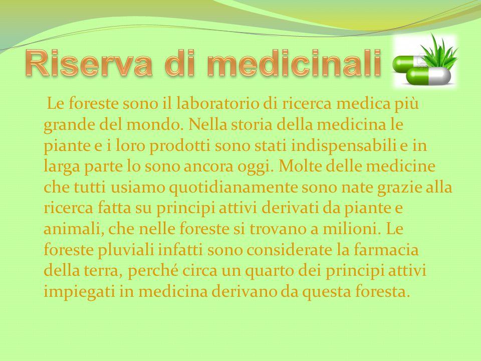 Le foreste sono il laboratorio di ricerca medica più grande del mondo. Nella storia della medicina le piante e i loro prodotti sono stati indispensabi