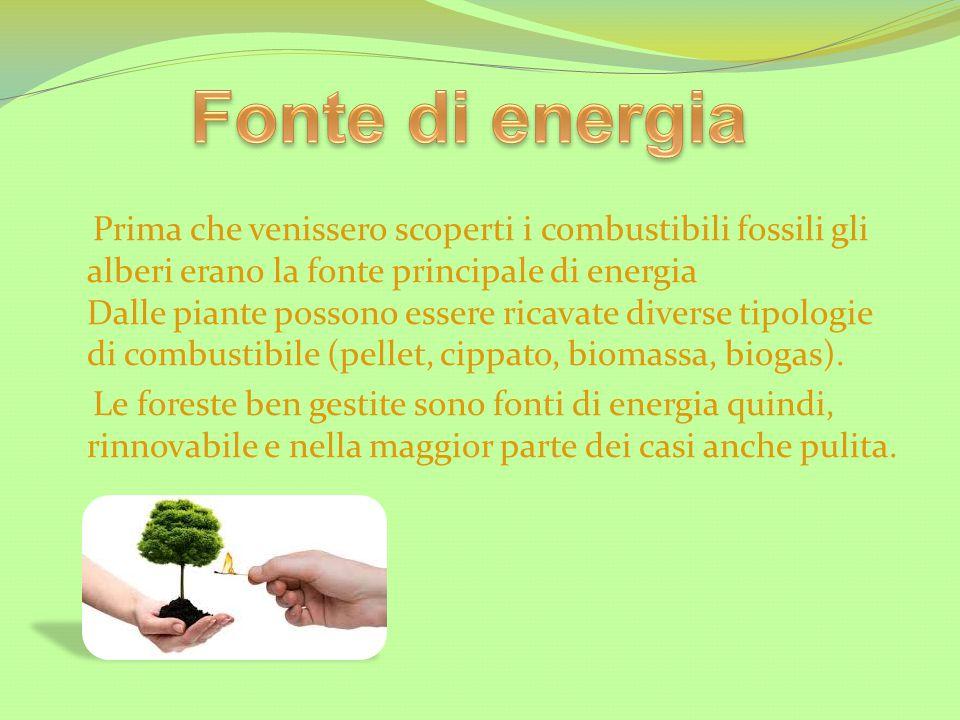 Prima che venissero scoperti i combustibili fossili gli alberi erano la fonte principale di energia Dalle piante possono essere ricavate diverse tipol
