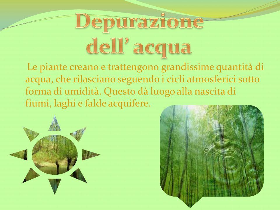 Le piante creano e trattengono grandissime quantità di acqua, che rilasciano seguendo i cicli atmosferici sotto forma di umidità. Questo dà luogo alla