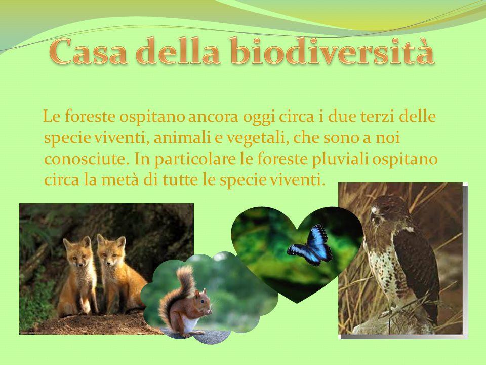 Le foreste ospitano ancora oggi circa i due terzi delle specie viventi, animali e vegetali, che sono a noi conosciute. In particolare le foreste pluvi
