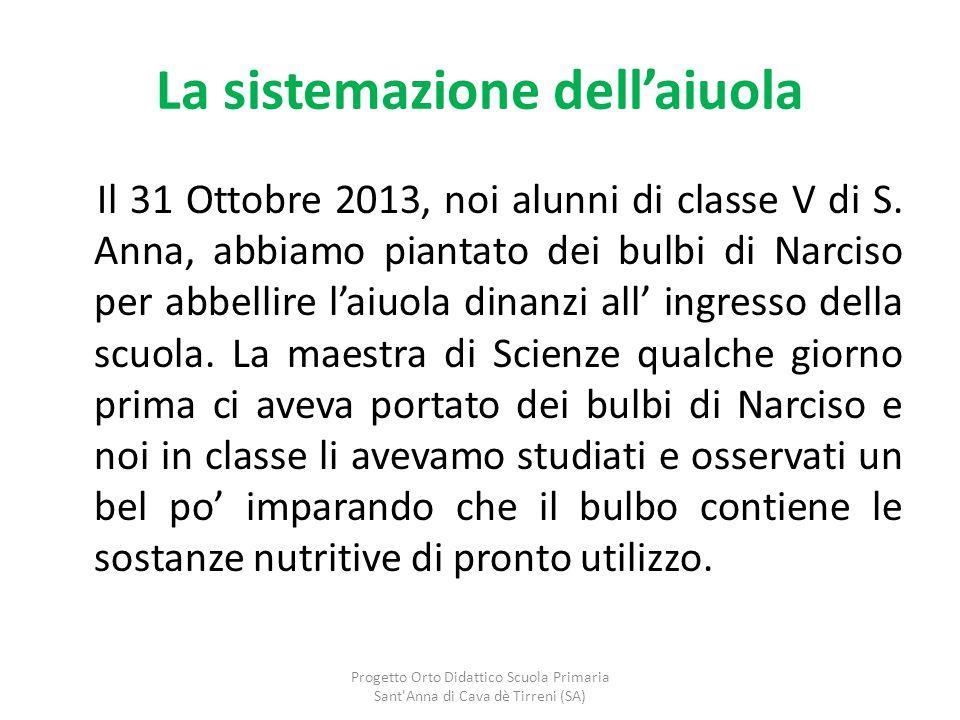 La sistemazione dell'aiuola Il 31 Ottobre 2013, noi alunni di classe V di S. Anna, abbiamo piantato dei bulbi di Narciso per abbellire l'aiuola dinanz