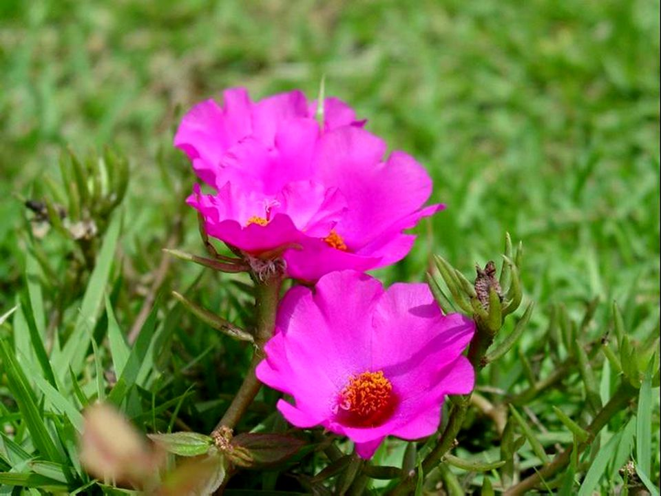 Sii flessibile come i fiori e come le farfalle quando affrontano il vento forte...