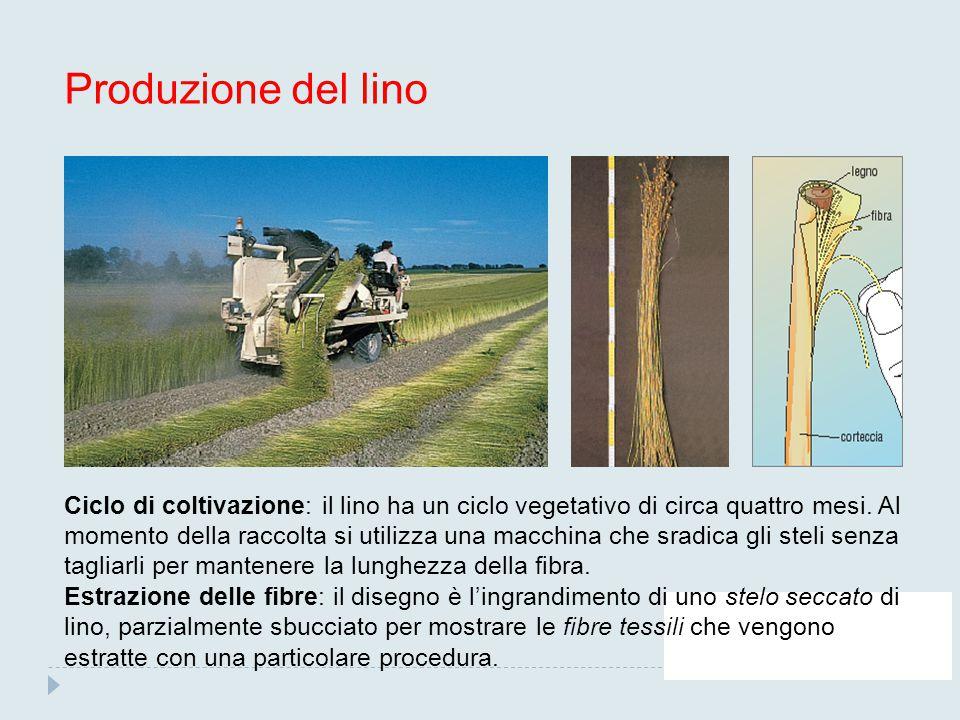 Produzione del lino Ciclo di coltivazione: il lino ha un ciclo vegetativo di circa quattro mesi. Al momento della raccolta si utilizza una macchina ch