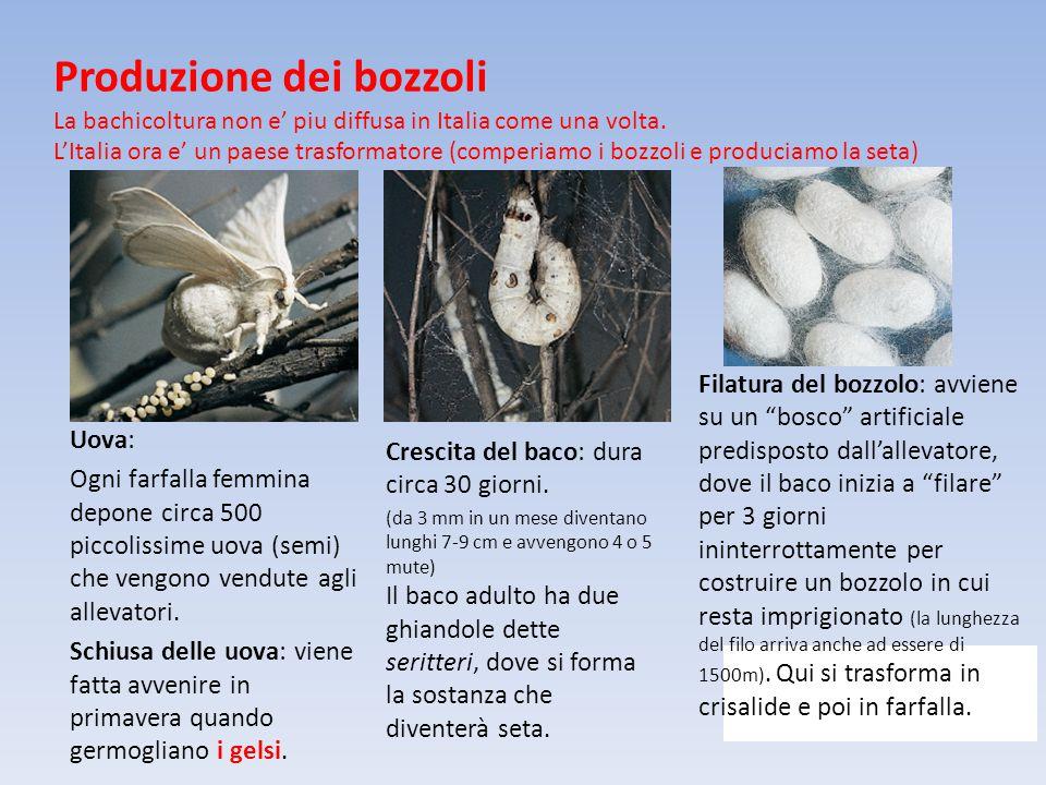 Produzione dei bozzoli La bachicoltura non e' piu diffusa in Italia come una volta. L'Italia ora e' un paese trasformatore (comperiamo i bozzoli e pro