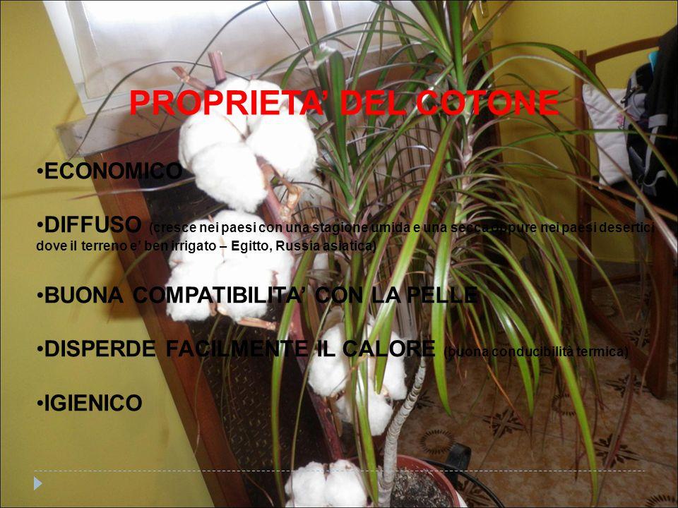 PROPRIETA' DEL COTONE ECONOMICO DIFFUSO (cresce nei paesi con una stagione umida e una secca oppure nei paesi desertici dove il terreno e' ben irrigato – Egitto, Russia asiatica) BUONA COMPATIBILITA' CON LA PELLE DISPERDE FACILMENTE IL CALORE (buona conducibilità termica) IGIENICO