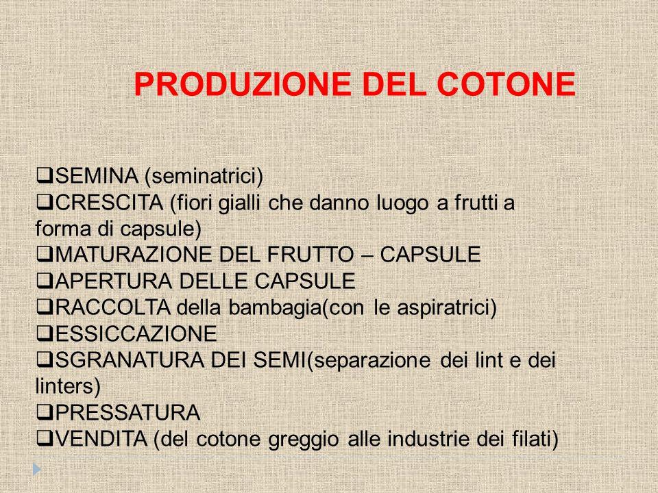 Lino Il lino è una fibra di origine vegetale lunga circa 1 m.