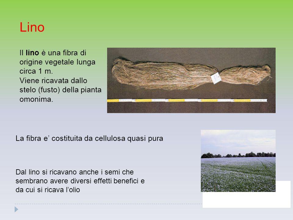 Lino Il lino è una fibra di origine vegetale lunga circa 1 m. Viene ricavata dallo stelo (fusto) della pianta omonima. La fibra e' costituita da cellu