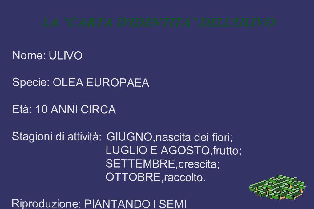 """La """"carta d'identità"""" dell'ulivo Nome: ULIVO Specie: OLEA EUROPAEA Età: 10 ANNI CIRCA Stagioni di attività: GIUGNO,nascita dei fiori; LUGLIO E AGOSTO,"""