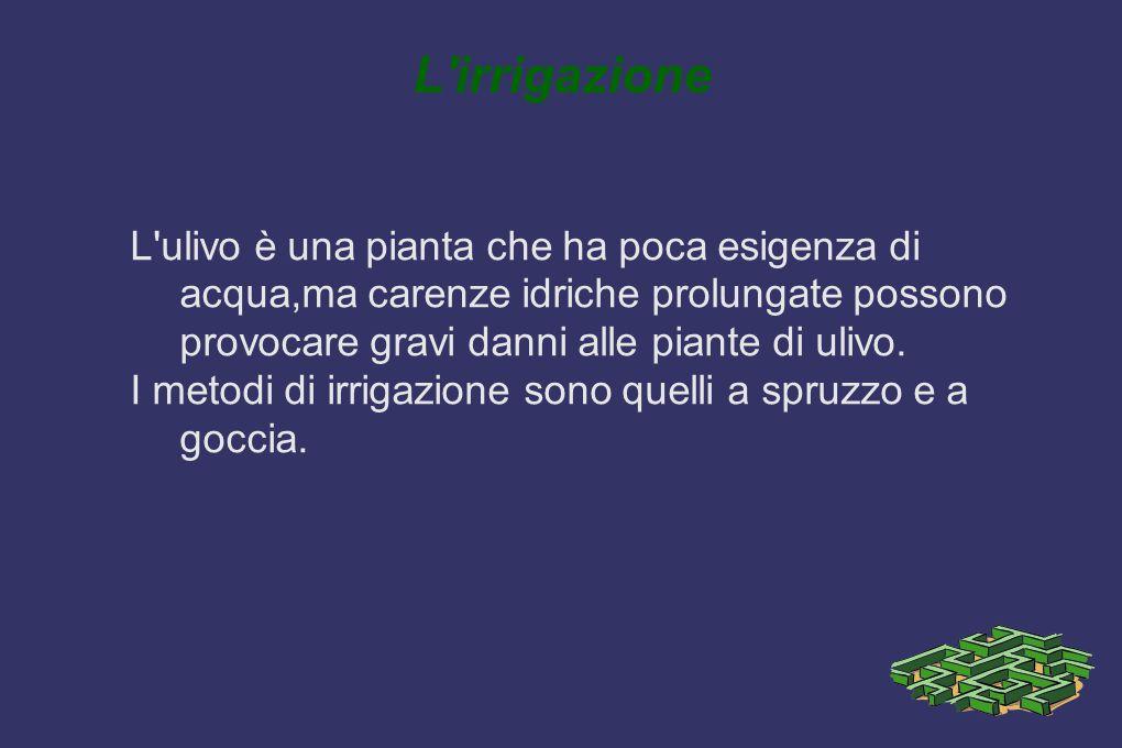 L'irrigazione L'ulivo è una pianta che ha poca esigenza di acqua,ma carenze idriche prolungate possono provocare gravi danni alle piante di ulivo. I m