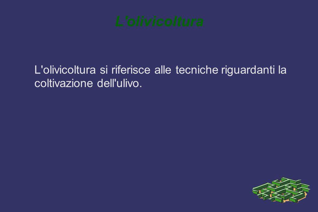 L'olivicoltura L'olivicoltura si riferisce alle tecniche riguardanti la coltivazione dell'ulivo.