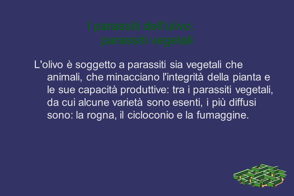 Parassiti dell ulivo: parassiti animali I parassiti animali in grado di danneggiare l olivo sono oltre 20, e tra questi i più dannosi sono la cocciniglia, la tignola e la mosca delle olive e le formiche che ci abitano.
