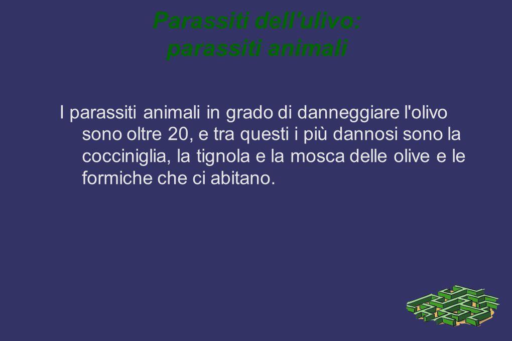 Parassiti dell'ulivo: parassiti animali I parassiti animali in grado di danneggiare l'olivo sono oltre 20, e tra questi i più dannosi sono la coccinig