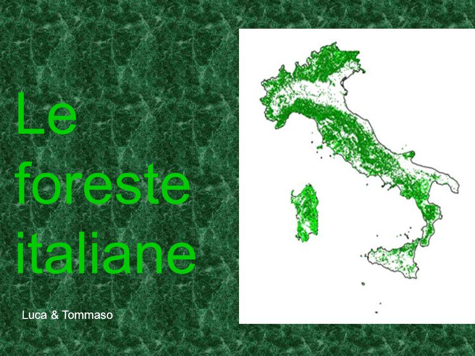 Le foreste italiane Luca & Tommaso