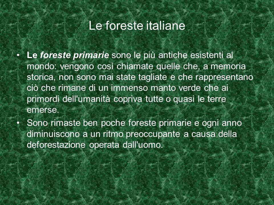 Le foreste italiane Le foreste primarie sono le più antiche esistenti al mondo: vengono così chiamate quelle che, a memoria storica, non sono mai state tagliate e che rappresentano ciò che rimane di un immenso manto verde che ai primordi dell umanità copriva tutte o quasi le terre emerse.