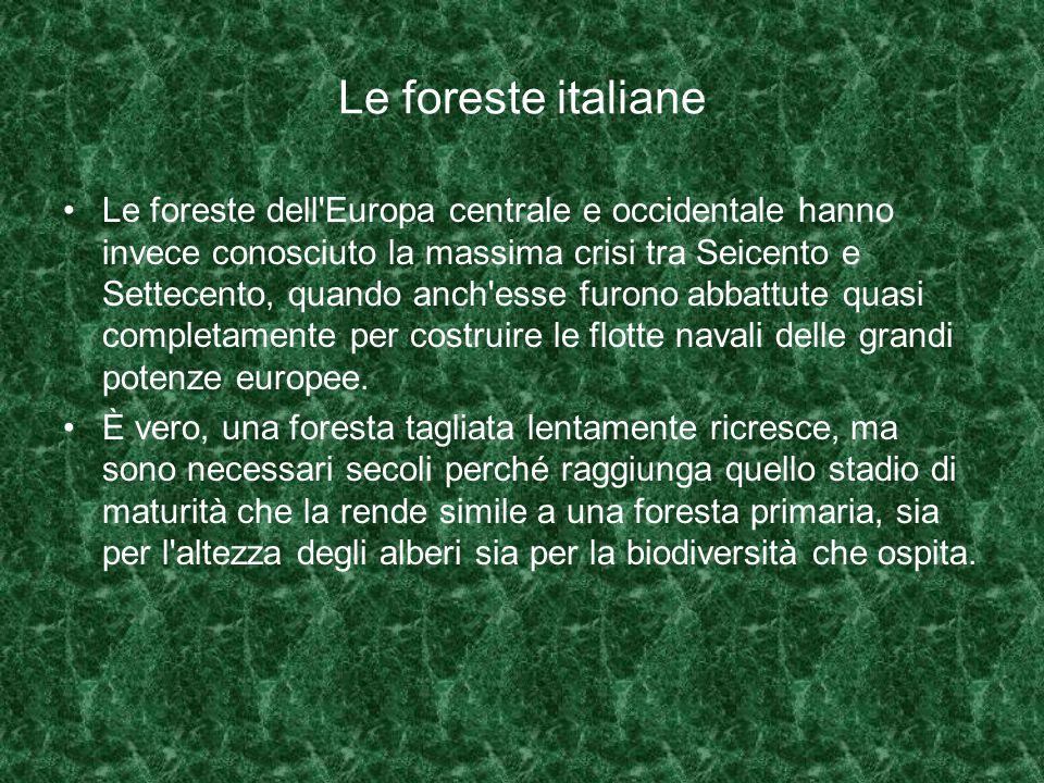 Le foreste italiane Le foreste dell Europa centrale e occidentale hanno invece conosciuto la massima crisi tra Seicento e Settecento, quando anch esse furono abbattute quasi completamente per costruire le flotte navali delle grandi potenze europee.