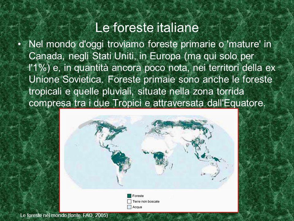 Le foreste italiane Nel mondo d oggi troviamo foreste primarie o mature in Canada, negli Stati Uniti, in Europa (ma qui solo per l 1%) e, in quantità ancora poco nota, nei territori della ex Unione Sovietica.