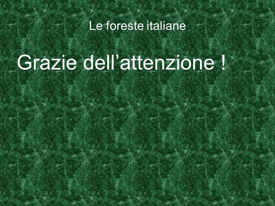 Le foreste italiane Grazie dell'attenzione !