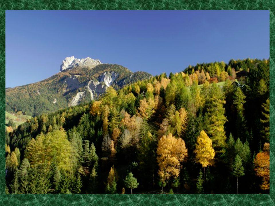 La superficie forestale italiana è di circa 10 milioni di ettari (9,98 milioni), pari ad un terzo del territorio nazionale.