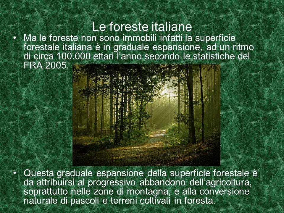 Le foreste italiane Ma le foreste non sono immobili infatti la superficie forestale italiana è in graduale espansione, ad un ritmo di circa 100.000 ettari l'anno secondo le statistiche del FRA 2005.