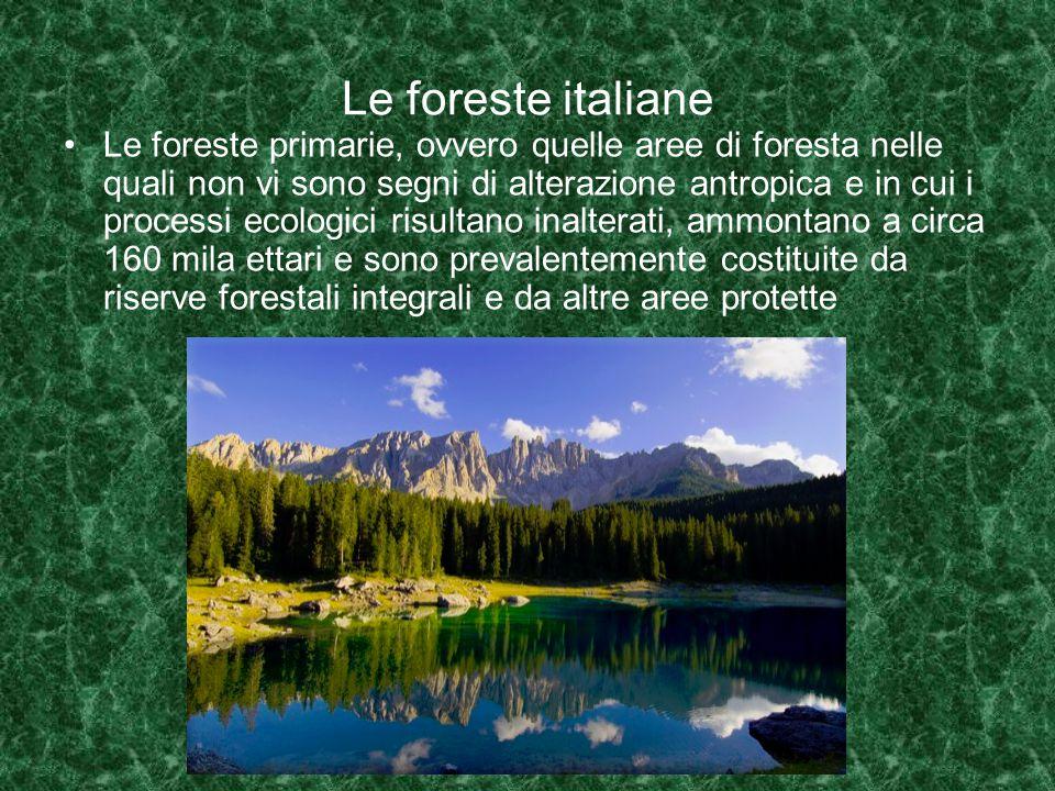 Le foreste italiane Le foreste primarie, ovvero quelle aree di foresta nelle quali non vi sono segni di alterazione antropica e in cui i processi ecologici risultano inalterati, ammontano a circa 160 mila ettari e sono prevalentemente costituite da riserve forestali integrali e da altre aree protette