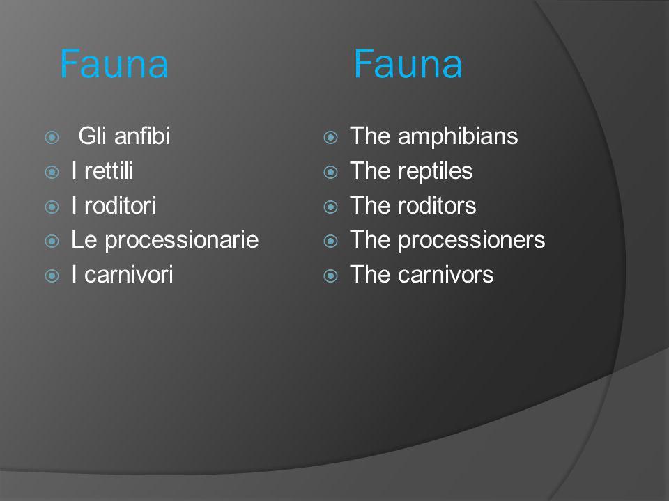 Fauna Fauna  Gli anfibi  I rettili  I roditori  Le processionarie  I carnivori  The amphibians  The reptiles  The roditors  The processioners  The carnivors