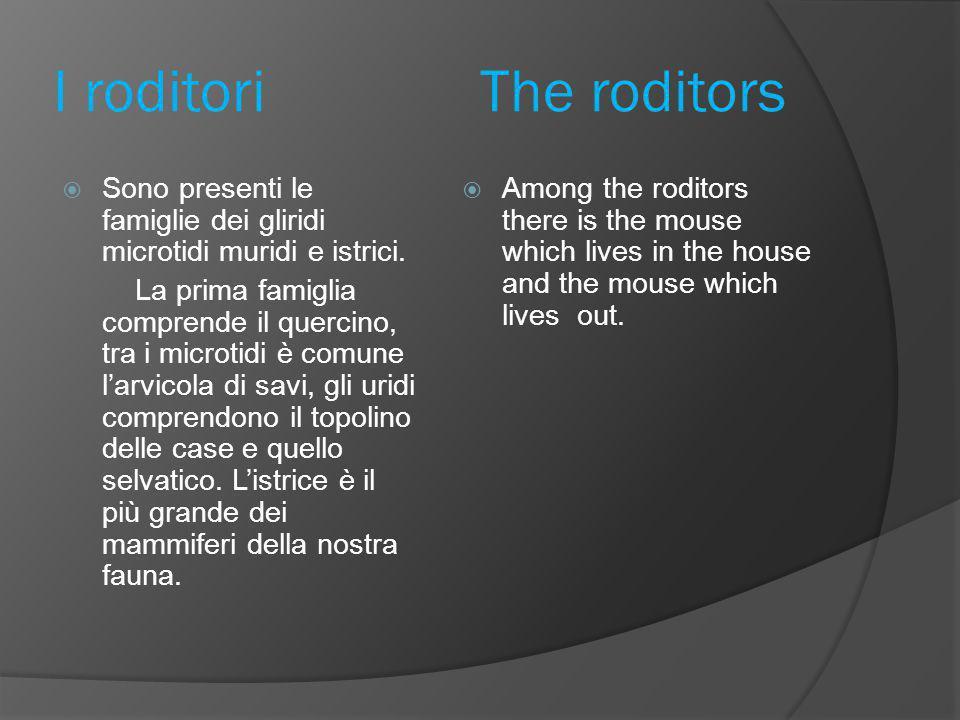 I roditori The roditors  Sono presenti le famiglie dei gliridi microtidi muridi e istrici.