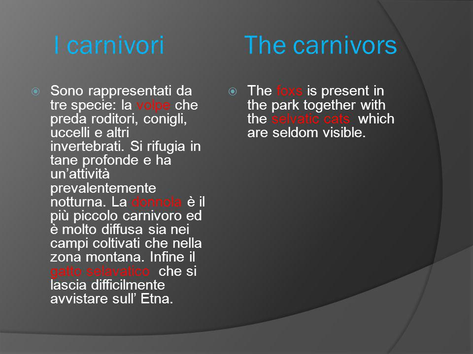 I carnivori The carnivors  Sono rappresentati da tre specie: la volpe che preda roditori, conigli, uccelli e altri invertebrati.