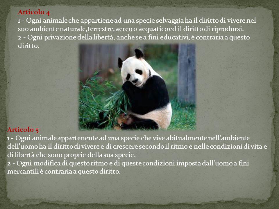 Articolo 4 1 - Ogni animale che appartiene ad una specie selvaggia ha il diritto di vivere nel suo ambiente naturale,terrestre, aereo o acquatico ed il diritto di riprodursi.