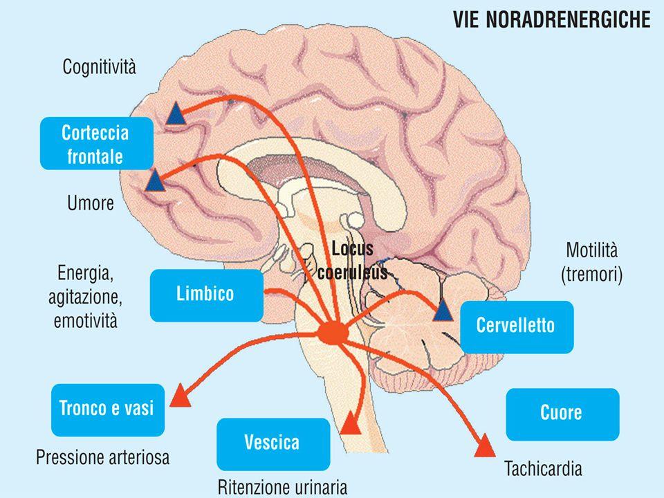 Ipotesi monoaminergica Depressione deriva da deficit nella trasmissione monoaminergica Deriva dall'osservazione clinica degli effetti di farmaci creat