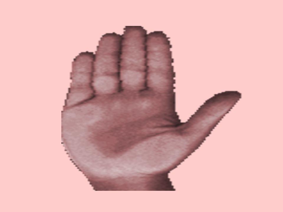 Questo test consiste di immettere le varie risposte della mano sinistra, e automaticamente il computer elaborerà il significato.