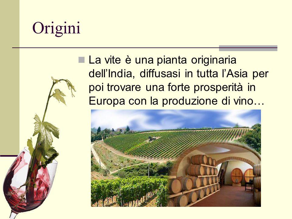 Origini La vite è una pianta originaria dell'India, diffusasi in tutta l'Asia per poi trovare una forte prosperità in Europa con la produzione di vino