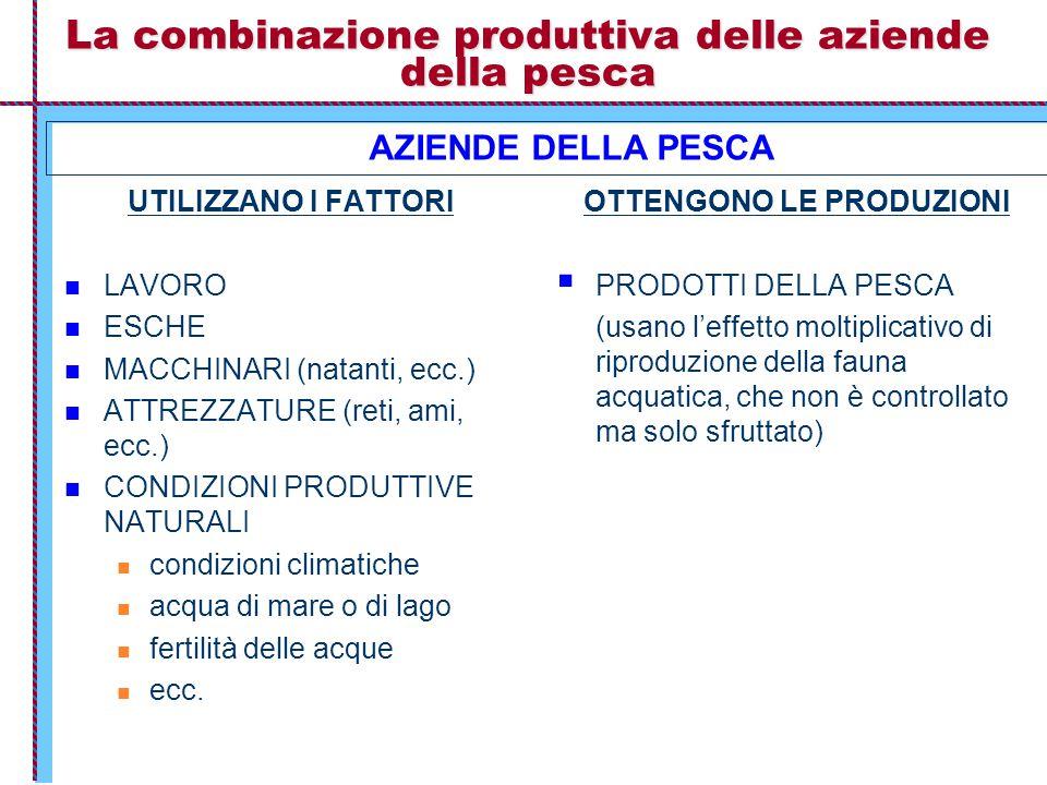 La combinazione produttiva delle aziende della pesca UTILIZZANO I FATTORI LAVORO ESCHE MACCHINARI (natanti, ecc.) ATTREZZATURE (reti, ami, ecc.) CONDI