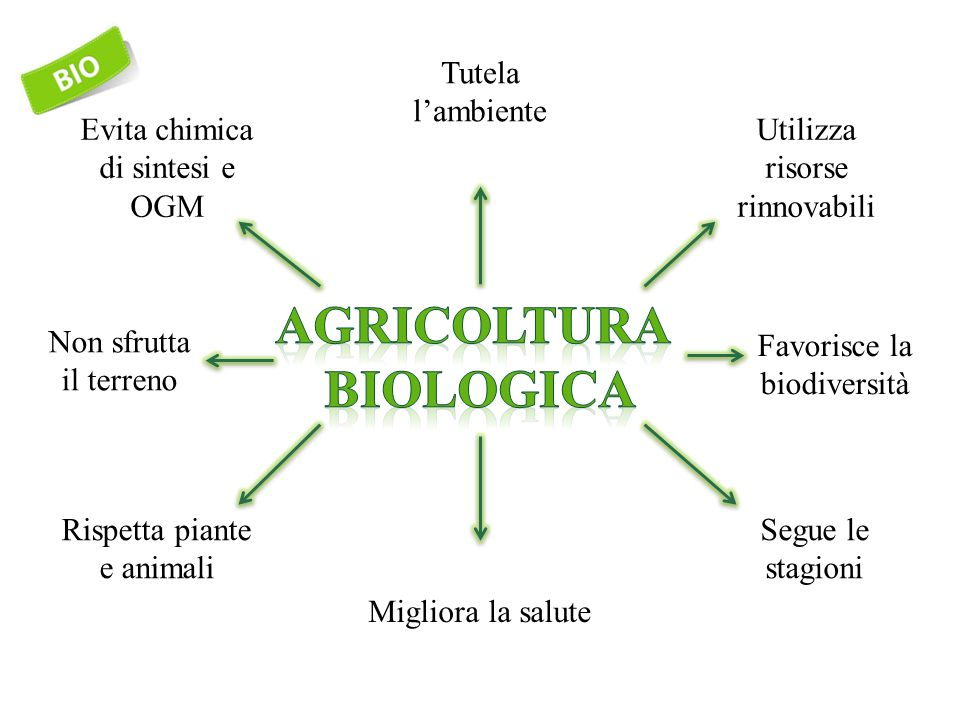 Principi del biologico (IFOAM 2005)  Salute (Health)  Ecologia (Ecology)  Correttezza (Fairness)  Precauzione (Care)