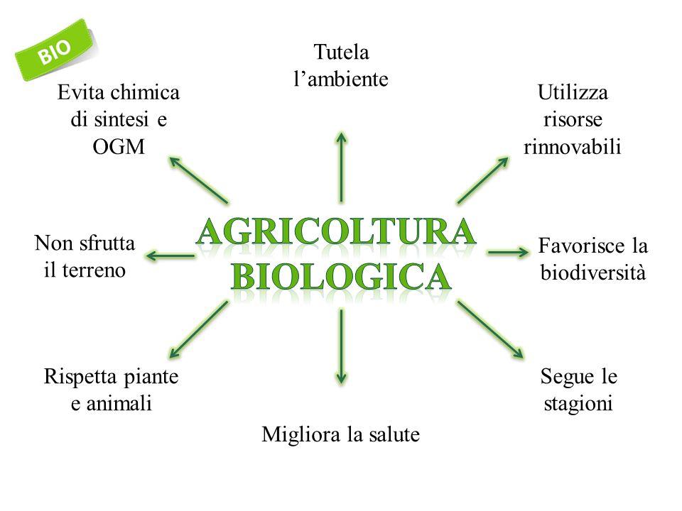 Tutela l'ambiente Utilizza risorse rinnovabili Favorisce la biodiversità Segue le stagioni Migliora la salute Rispetta piante e animali Non sfrutta il terreno Evita chimica di sintesi e OGM
