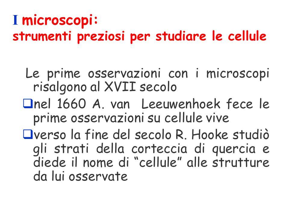 I microscopi: strumenti preziosi per studiare le cellule Le prime osservazioni con i microscopi risalgono al XVII secolo qnel 1660 A. van Leeuwenhoek