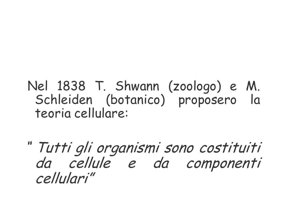 """Nel 1838 T. Shwann (zoologo) e M. Schleiden (botanico) proposero la teoria cellulare: """" Tutti gli organismi sono costituiti da cellule e da componenti"""
